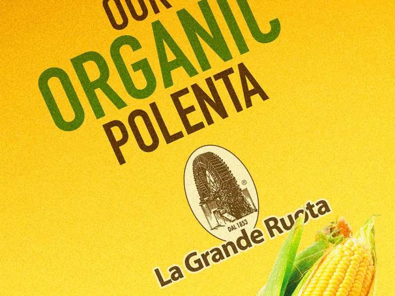 portfolio-lgr-bio1